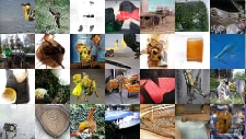 collage of ImageNet images